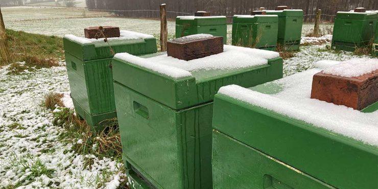 Winter bei den Bienen