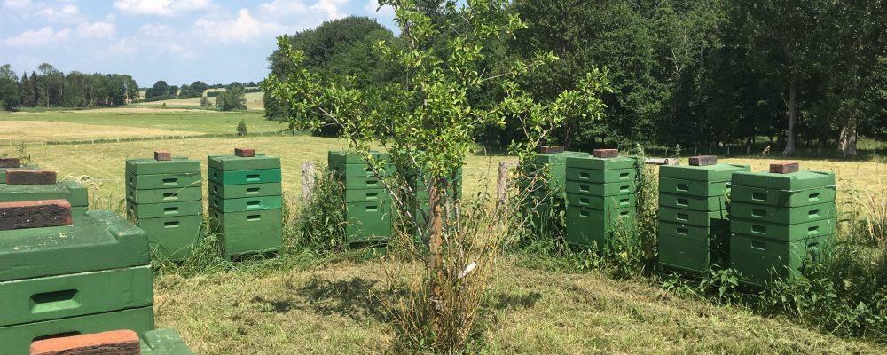 Bienenstand in Stormarn